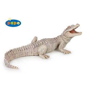 Baby White Crocodile