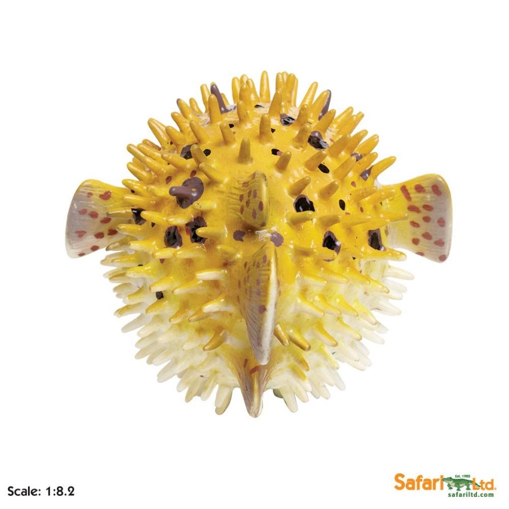 Pufferfish for Puffer fish puffing