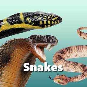 view Snake Toys & Models products