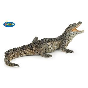 Baby Nile Crocodile